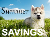 summer saving